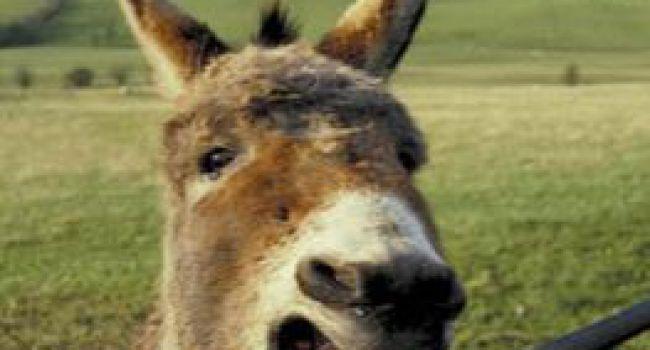 L'âne dans le puit
